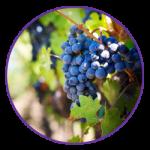 wat-is-vineyard